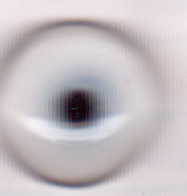 Eyes Gannet 14mm
