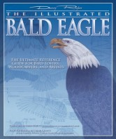 Illustrated_Bald_Eagle_3