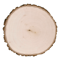 Basswood Thick Round with Bark