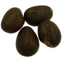 Tagua Nuts