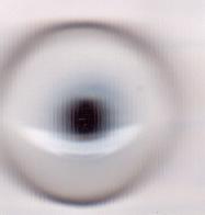 Eyes Gannet 14mm