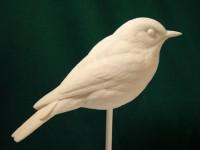 Bob Guge Eastern Bluebird #7