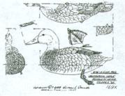Duck Patterns instock